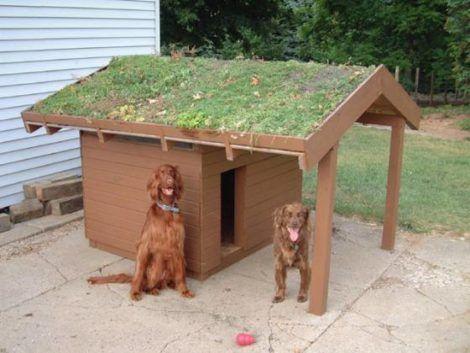 casinhas de cachorro 6 470x353 - CASINHAS de Cachorro lindas e confortáveis