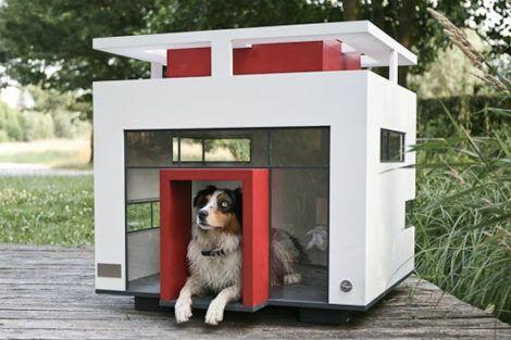 imagem 15 470x313 - CASINHAS de Cachorro lindas e confortáveis