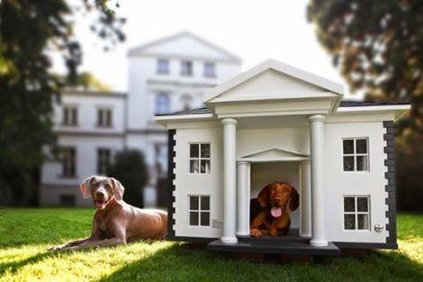 imagem 23 470x313 - CASINHAS de Cachorro lindas e confortáveis