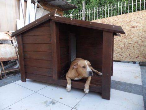 imagem 28 470x353 - CASINHAS de Cachorro lindas e confortáveis