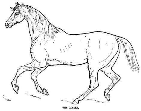 desenho de cavalo para colorir 6 470x370 - Desenhos de CAVALO PARA COLORIR para crianças