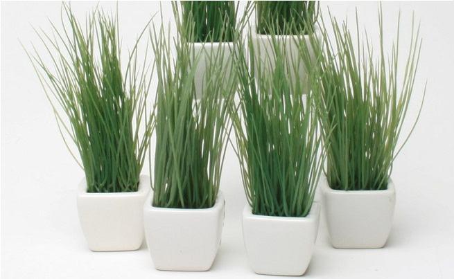 Melhores plantas decorativas de interior de sua casa ou for Plantas decorativas