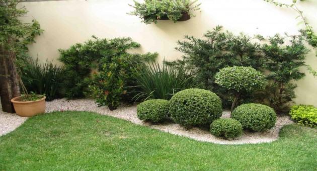 Melhores plantas decorativas de interior de sua casa ou for Plantas decorativas de interior