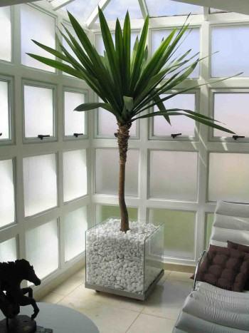 Melhores plantas decorativas de interior de sua casa ou - Plantas decorativas de interior ...