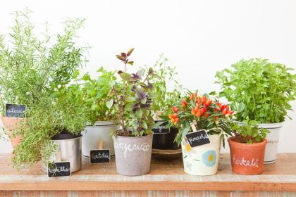 como fazer horta na sacada de apartamento 420x280 - HORTA VERTICAL PARA SACADA do apartamento, veja