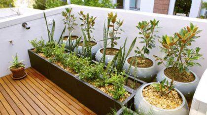 horta na sacada de apartamento com ervas 420x233 - HORTA VERTICAL PARA SACADA do apartamento, veja