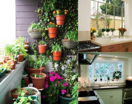 lindas dicas de horta na sacada de apartamento 420x331 - HORTA VERTICAL PARA SACADA do apartamento, veja