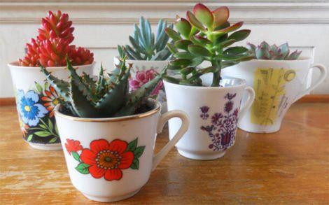 plantas suculentas decorativas 470x293 - Como plantar Suculentas e fazer o Seu Cultivo