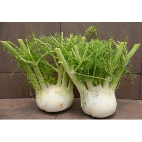 plantio de erva doce 470x470 - Como Plantar Erva Doce em Casa, Como é o cultivo